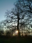 Coombe Woods - sunrise silhouette