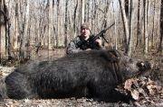 500-pound-wild-hog-3236934